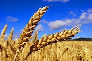 Immer mehr Betriebe stellen laut Bio Suisse auf Bio-Landbau um.